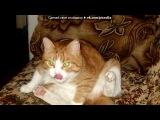 «рыжик» под музыку Печенева Танечка, 6 лет - Рыжий кот. самая лучшая запись песни!!!!. Picrolla